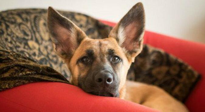 Właścicielka dała w prezencie psu kopię swojego krzesła - oto dlaczego