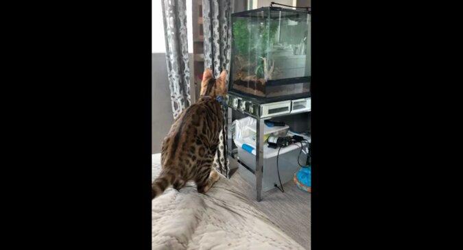 """Kot postanowił wskoczyć do akwarium, ale przeliczył się i """"zepsuł"""". Zabawny filmik"""