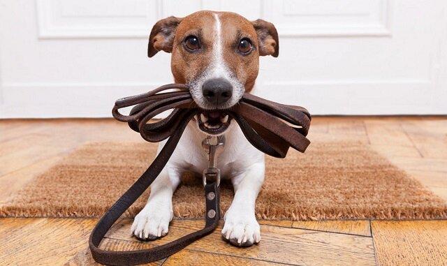 Schludne rasy psów odpowiednie do mieszkania i domu