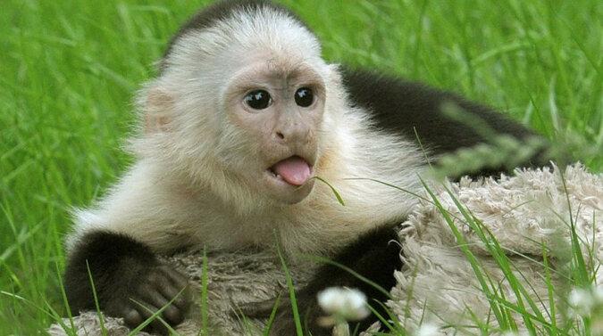 Śpiąca małpka zauroczyła ogromną liczbę internautów. Wideo