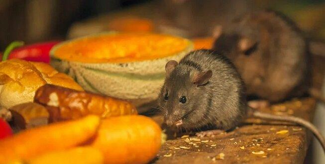 Jak pozbyliśmy się myszy w spiżarni i w wiejskim domu. Stary ludowy sposób