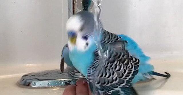 Jakie cuda robi ta papuga, wszystkich zaskoczy - wspaniały filmik