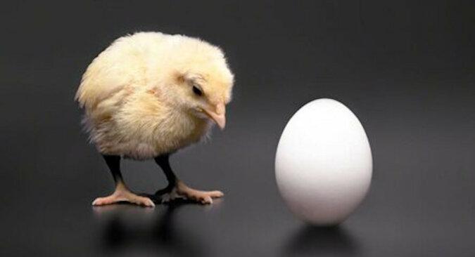 Co było pierwsze, jajko czy kura? Naukowcom udało się udzielić konkretnej odpowiedzi