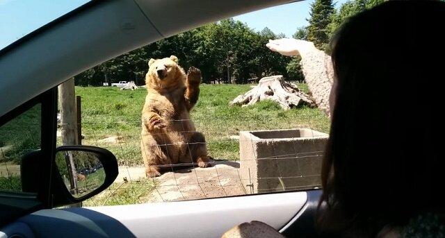 Wideo: Niedźwiedź wita turystów i tego samego oczekuje od nich