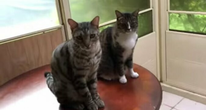 Kiedy twój przyjaciel jest donosicielem: kot wydał swojego przyjaciela z podrobami