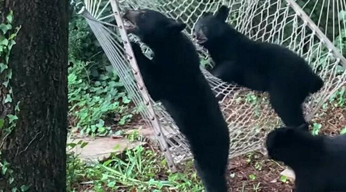 Przezabawny incydent z ciekawskimi niedźwiedziami złapanymi na wideo - co za synchroniczność