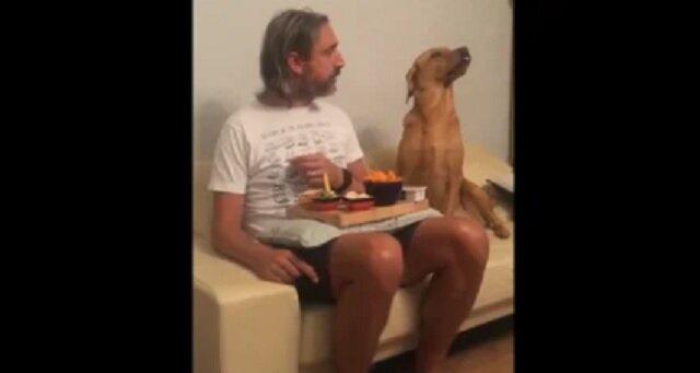 Głodny, ale dumny: pies patrzący na właściciela jedzący obiad rozśmieszył sieć. Wideo