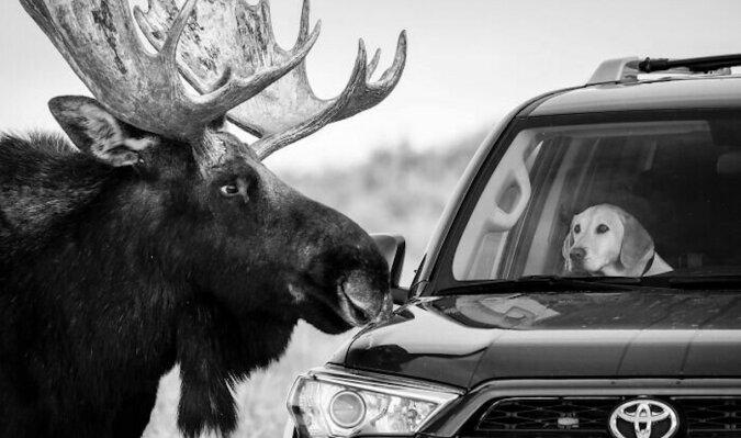 Najlepsze zdjęcia dzikiej przyrody wybrane przez internautów