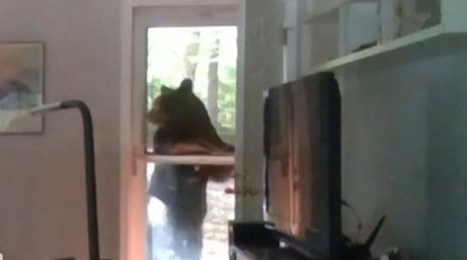 Jestem na liście. Niedźwiedź próbował dostać się na imprezę DJ-a. Wideo