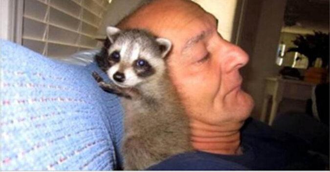 Mężczyzna uratował małego szopa, zaopiekował się i wypuścił go do lasu. Ale coś poszło nie tak