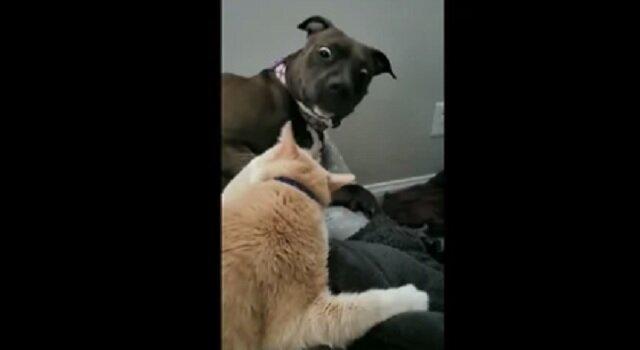 Kot w odpowiedzi na czułość podrapał psa, którego reakcja jest bezcenna. Wideo
