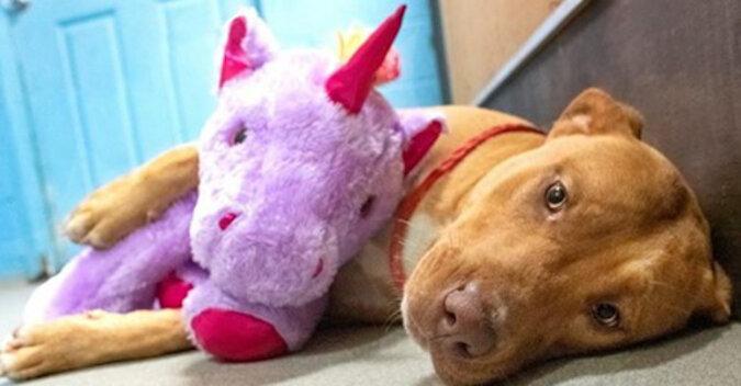 Bezdomny pies kilkakrotnie kradł pluszową zabawkę ze sklepu