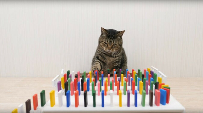 Filmik, w którym właściciel w oryginalny sposób karmi koty za pomocą domino