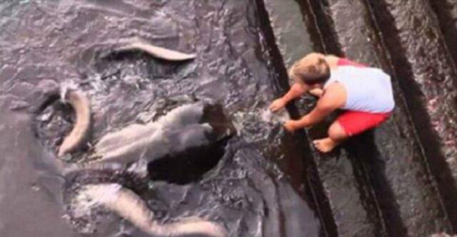 Dzieciak bawi się z potworem morskim. Czy zgadniesz, co to jest?