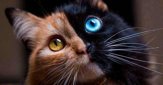 Kot o najrzadszym ubarwieniu na świecie: jak wygląda jego życie?