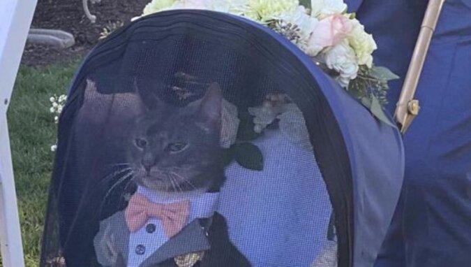 Kot, który miał przekazać nowożeńcom obrączki, stał się bohaterem żartów w sieciach społecznościowych