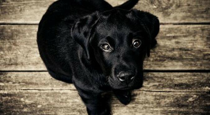 Właściciele postanowili zachować pamięć o swoim ukochanym psie