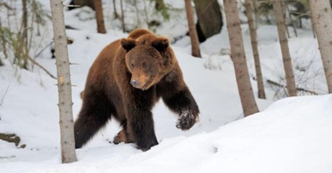 Ten niedźwiedź otrzymał kij i postanowił zostać mistrzem kung fu: zabawne wideo