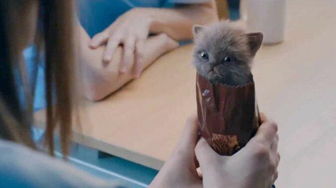 Kocięta i ciastko czekoladowe: najsłodsza reklama na świecie