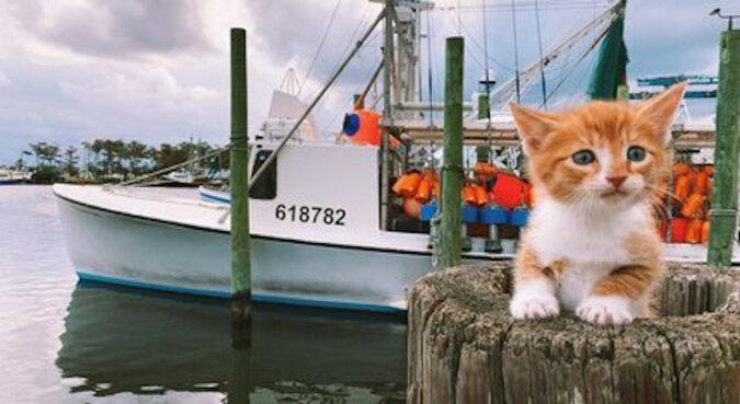Ten kociak zaskoczył wszystkich. Pływa lepiej niż pies i uwielbia wodę