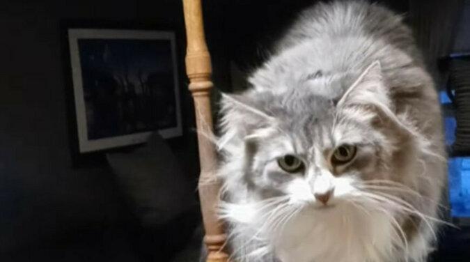 Kot-tancerz rozbawił właścicieli. Wideo