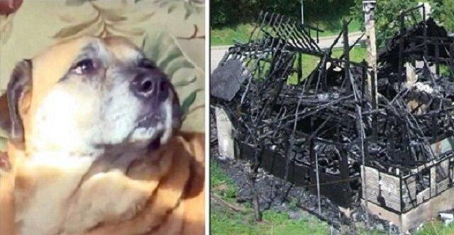 Uratowany z pożaru pies dwa miesiące później doprowadził ludzi do czarnej dziury w spalonym domu