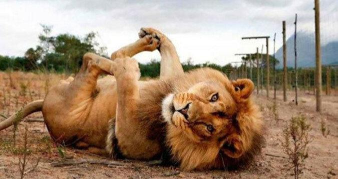 Pozowanie zwierząt do zdjęć rzuca wyzwanie modelom różnych magazynów