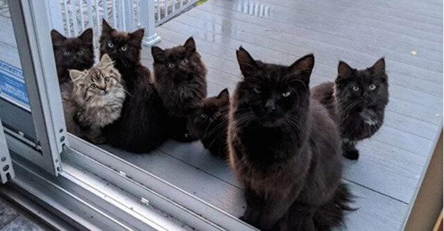 Bezpańska kotka bez wątpienia zdecydowała, komu powierzyć swoje kocięta