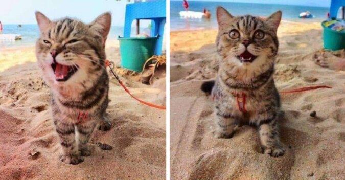Kot, który pierwszy raz trafił na plażę. Zdjęcia