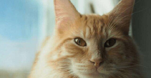 Niespokojny kot Tormund i jego nocne przygody pod muzykę