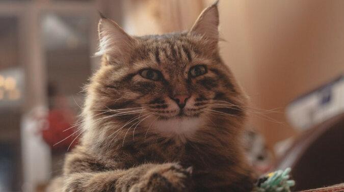 Kot-żartowniś przestraszył krewnego niespodziewanym spotkaniem i rozśmieszył sieć. Wideo