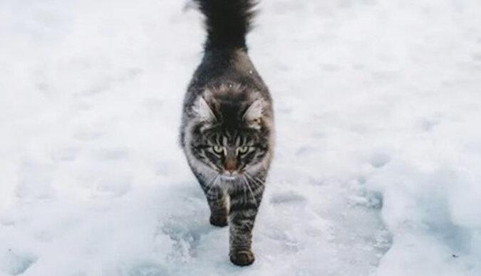 Sześć kotów pobiegło za swoim właścicielem na spacer po cienkim lodzie