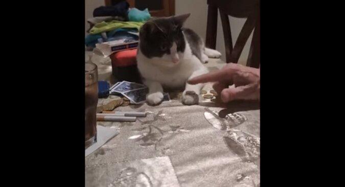 Kot z łatwością powtórzył sztuczkę z monetą za właścicielem i zaskoczył wszystkich. Wideo