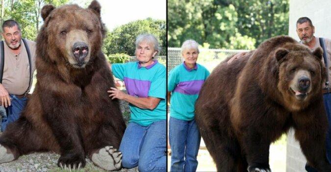 Dwie historie, kiedy niedźwiedzie żyły z ludźmi w doskonałej harmonii przez całe życie i do samego końca