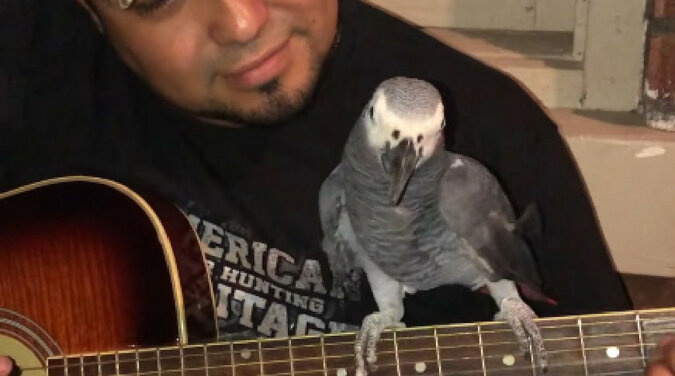 Artysta! Freestyle papugi nagrali na wideo