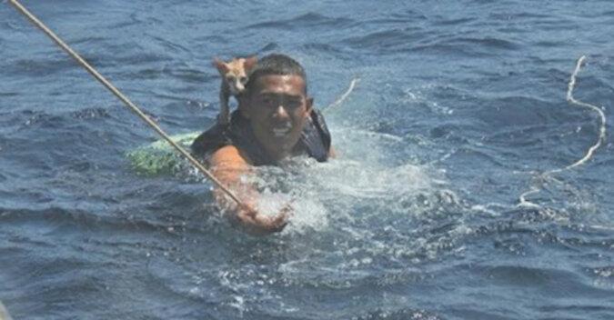 Straż graniczna uratowała koty z tonącego statku