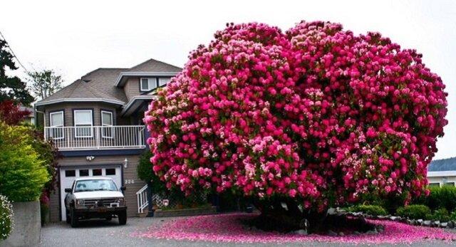 Zobacz galerię najpiękniejszych drzew świata