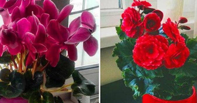 10 pięknych roślin doniczkowych, które kwitną kolorowo, bujnie i długo