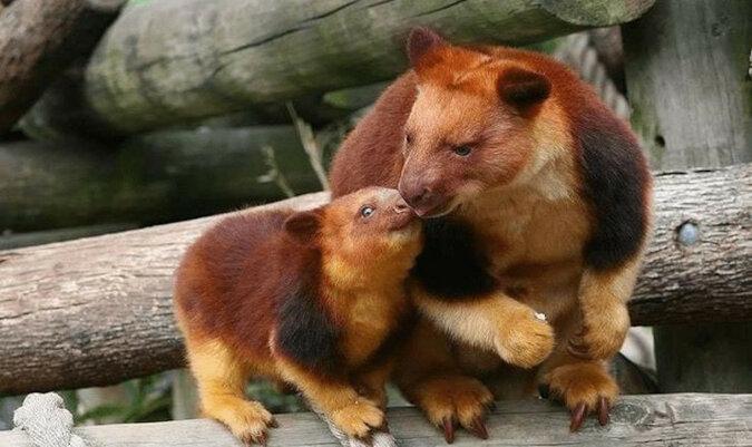 Zdjęcia rzadkich gatunków zwierząt, o których niewiele osób wie