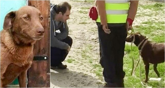 Pies rozpoznał właściciela po zapachu po dwóch latach rozłąki
