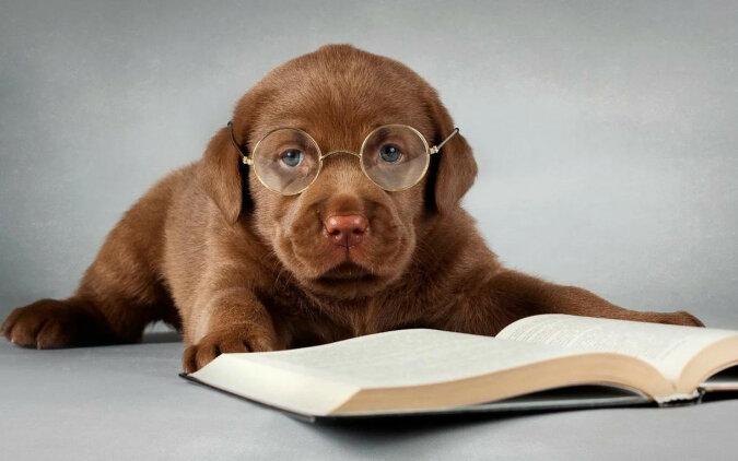 Naukowcy nazwali najmądrzejszą rasę psów