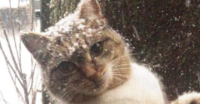 Dziewczyna zobaczyła za oknem zmarzniętą kotkę z kociętami