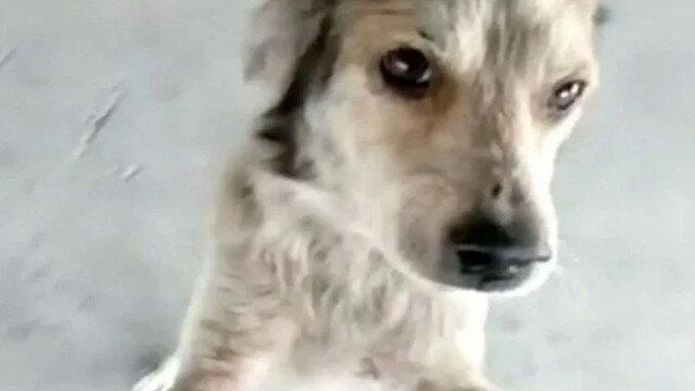 Pies został znaleziony po około 3 miesiącach. Zobacz wzruszające spotkanie. Wideo