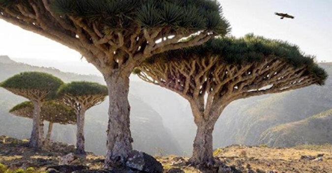 Najpiękniejsze i najbardziej niezwykłe lasy na świecie