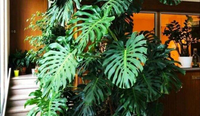 5 roślin pokojowych, które skazują Cię na samotność. Kwiaty odpędzające mężczyzn