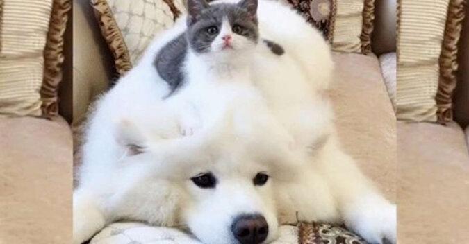 Mały kot i Puszek: jak przyjaźnią się pies i kot