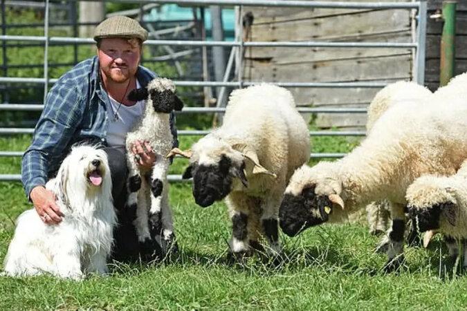 Pies próbował zostać pasterzem owiec, ale mu się to nie udało z zabawnego powodu