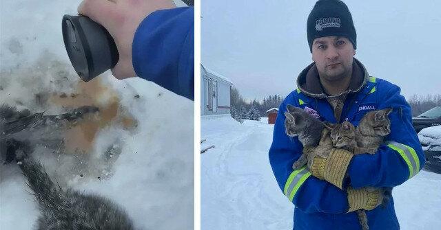 Historia o tym, jak pracownik kopalni ropy naftowej z Kanady za pomocą ciepłej kawy uratował kocięta zamrożone w śniegu