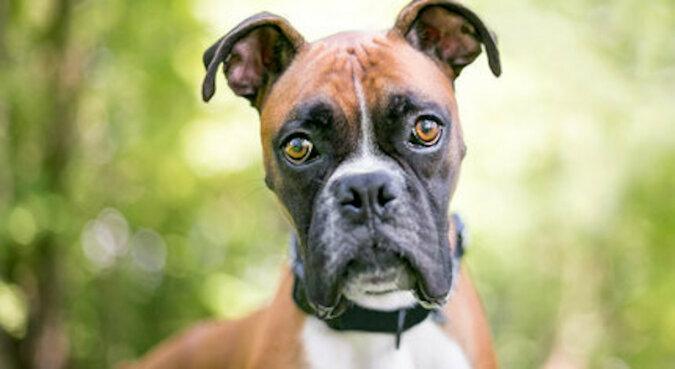 Dziwna mordka: pies spotyka właściciela z urlopu. Wideo