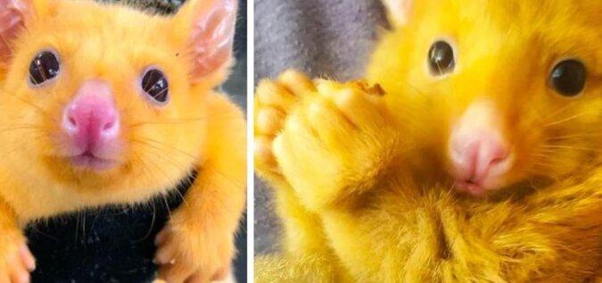Weterynarzom przywieźli dziwne zwierzę bardzo podobne do postaci z kreskówek